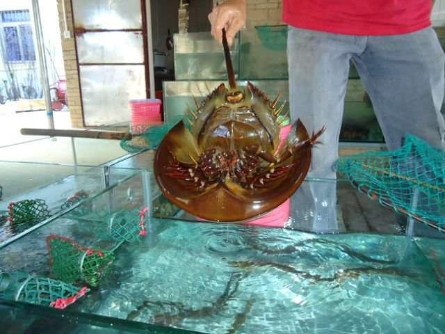 Китайская еда провинции Гуандун!-23 фото-