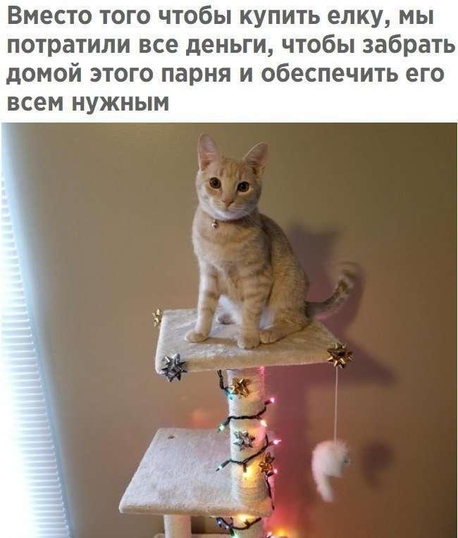 Картинки с котЭ-5 фото-