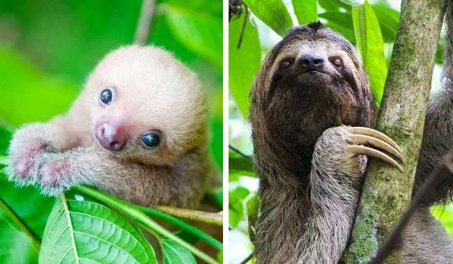 22детеныша животных, которые совсем непохожи насвоих родителей