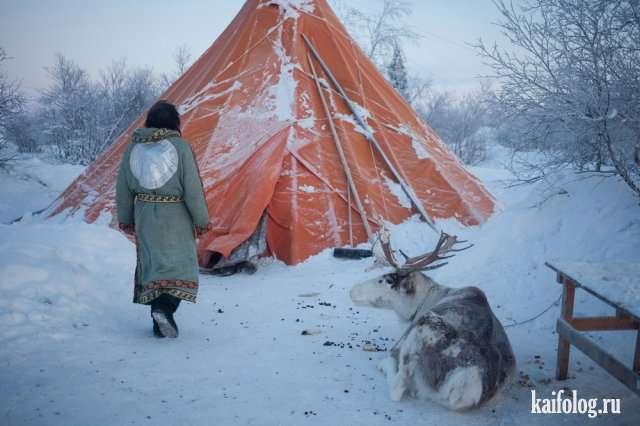 Русский север (60 фото)