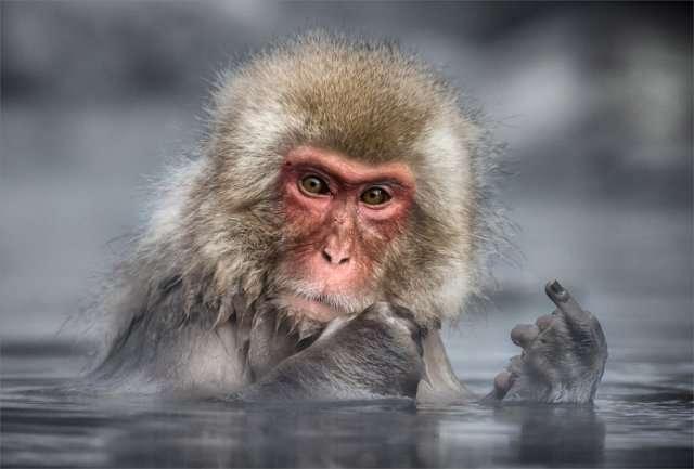 Самые комедийные животные года (40 фото)