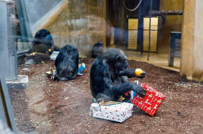 Новогодние подарки для братьев наших меньших