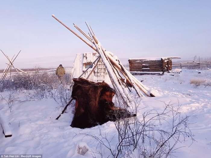 Якутские лошади &8211; удивительные животные, выживающие при экстремально низких температурах