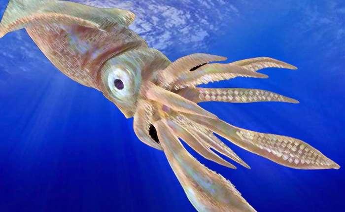 Ужасные кракены из морских пучин