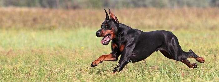 У каких собак самые болючие укусы