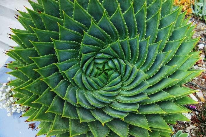 -Неубиваемые- растения, которые продержатся у тебя, -садовод-, даже дольше, чем кактус