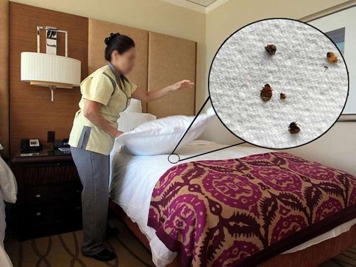 -Отельные страсти-, или что необходимо знать, прежде чем заселяться в ту или иную гостиницу?