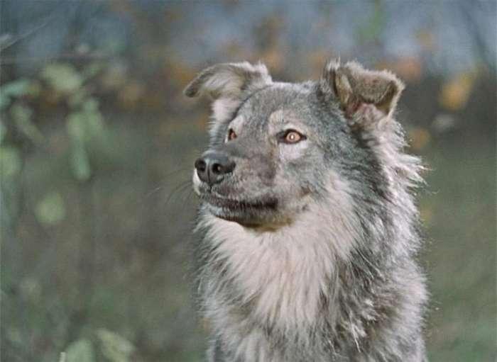 Как снимали комедию -Пёс Барбос и необычный кросс-