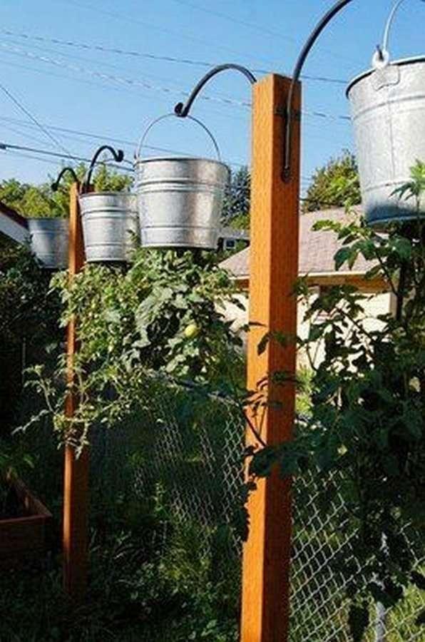 Интересная идея для выращивания растений