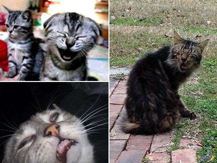Коллекция чихающих котов