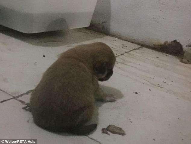 В китайском зоопарке питона кормили щенками (3 фото)