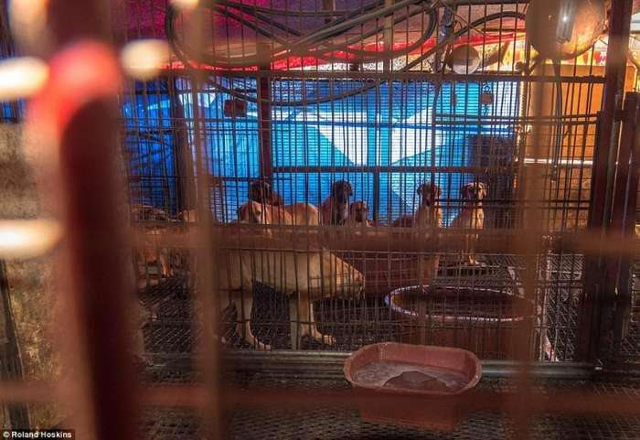 Власти Южной Кореи не хотят, чтобы туристы, прибывшие на Олимпийские игры, видели, как продают, убивают собак и готовят из них еду