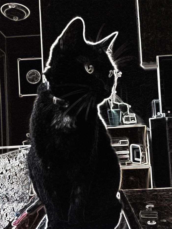 Мои любимые кошки