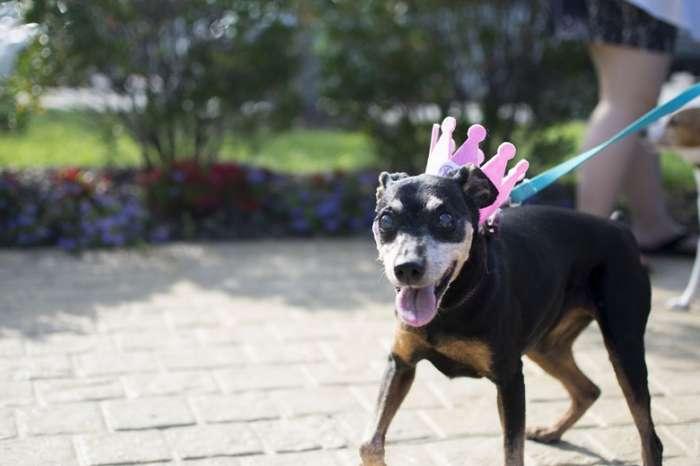 15-й День рождения любимой собаки