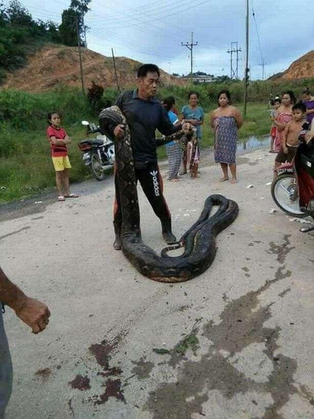 Охота на питонов, которых на острове Борнео считают деликатесом