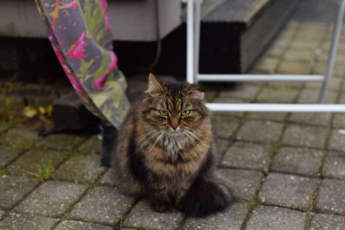Уличные кошки заслуживают помощи и сострадания
