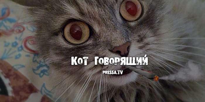 Кот говорящий