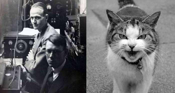 Как ученые превратили кота в живой телефон