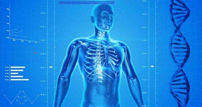 Самые необычные факты о человеческом теле