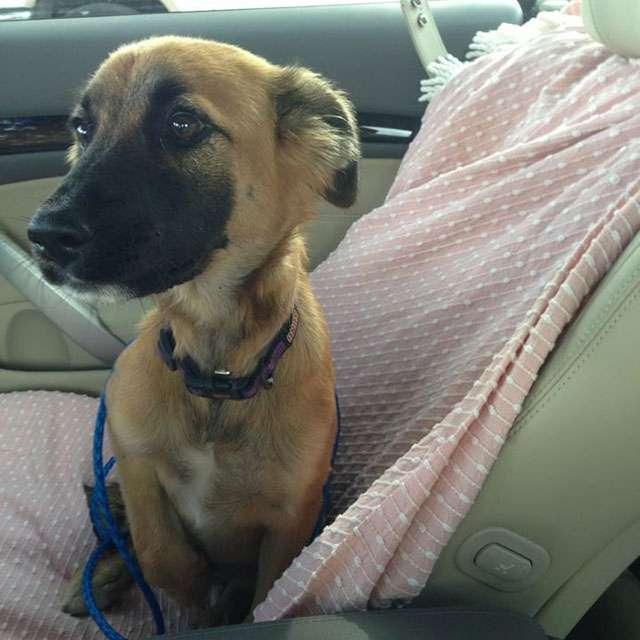 Собаки, которых забрали из приюта, едут первый раз домой