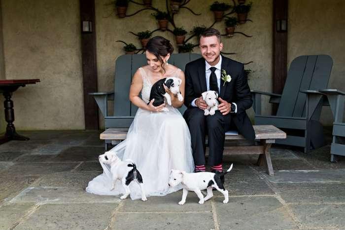 Щенки вместо свадебных букетов