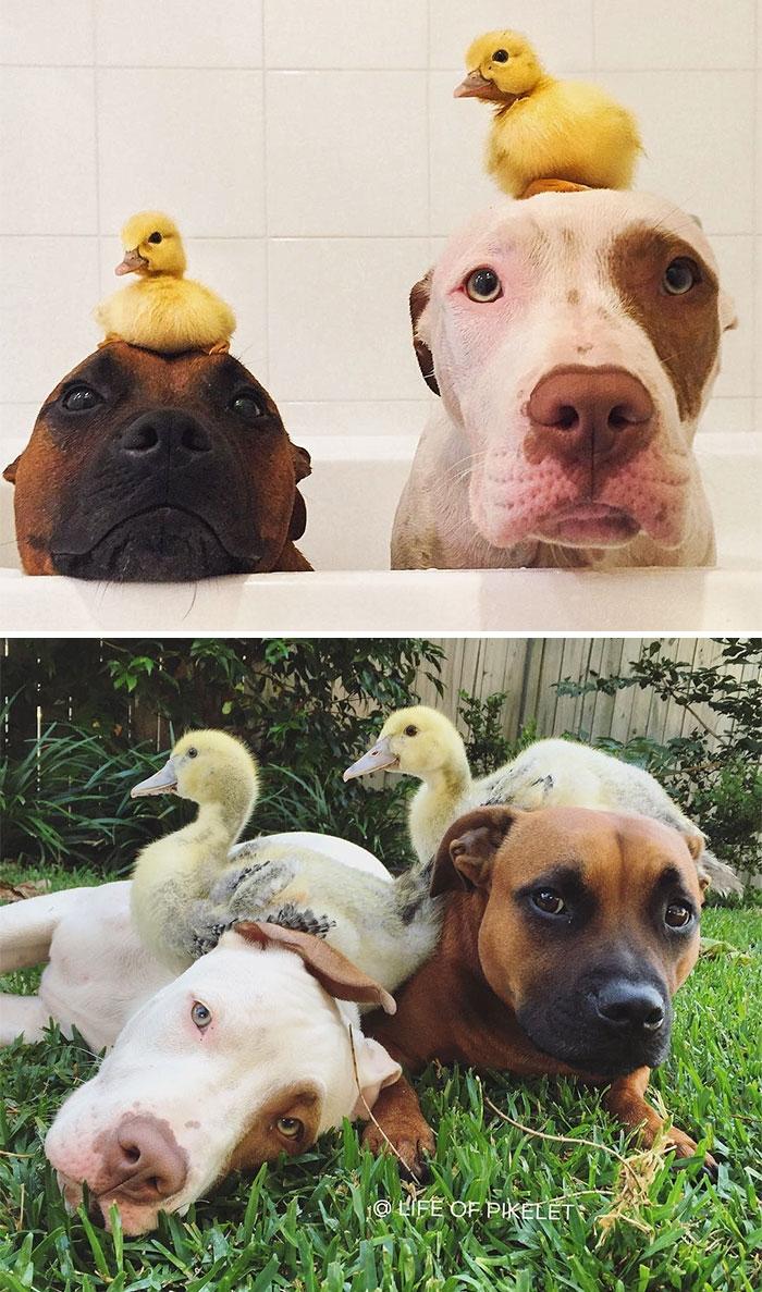 Животные, которые дружат всю жизнь