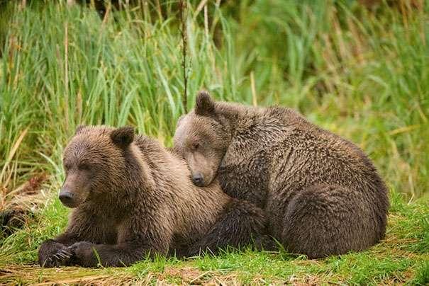 Забавные спящие животные
