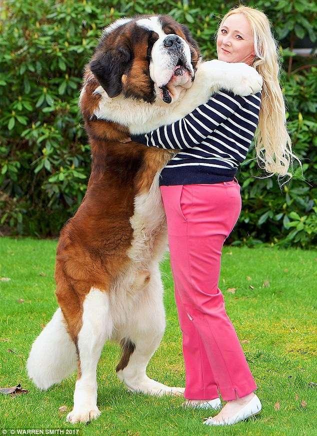 Наши собаки весят больше, чем мы!