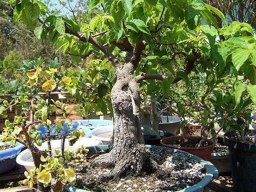 Конфетное дерево-7 фото-