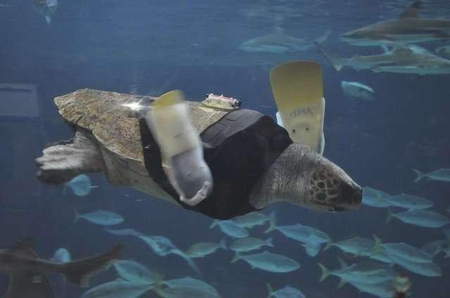 Животные, жизнь которых сохранили протезы-9 фото-