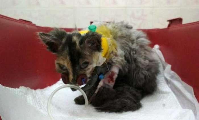 Котёнок попал в вентилятор. Чтобы спасти его, врачи пришивали мордашку на пуговицы-3 фото-