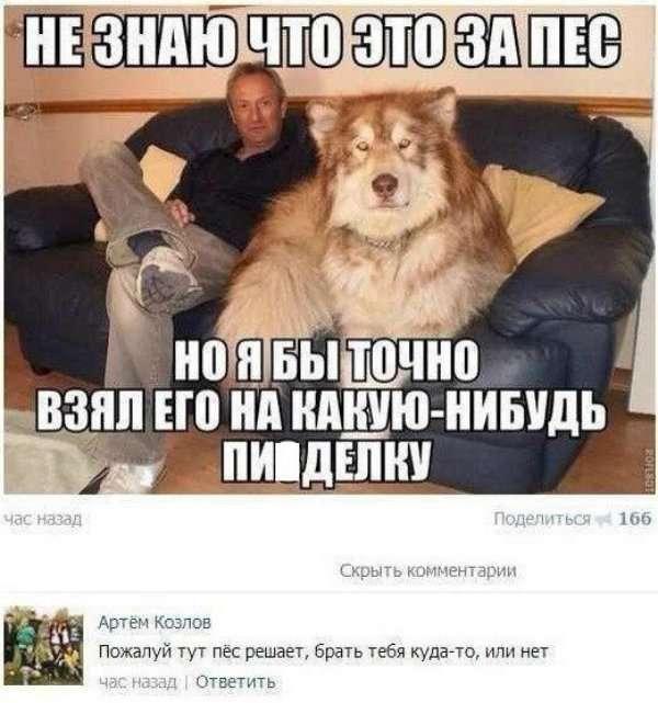Смешные комментарии из социальных сетей-84 фото-