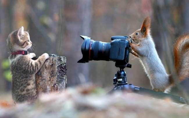 14человек, которых хлебом некорми— дай поиграть сфотошопом
