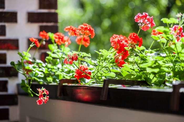 Чем подкормить растения, чтобы они буйно росли и цвели