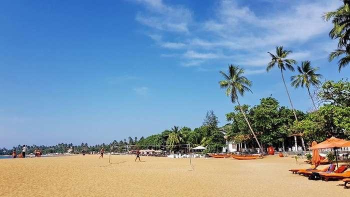 Новогодний Цейлон-45 фото-