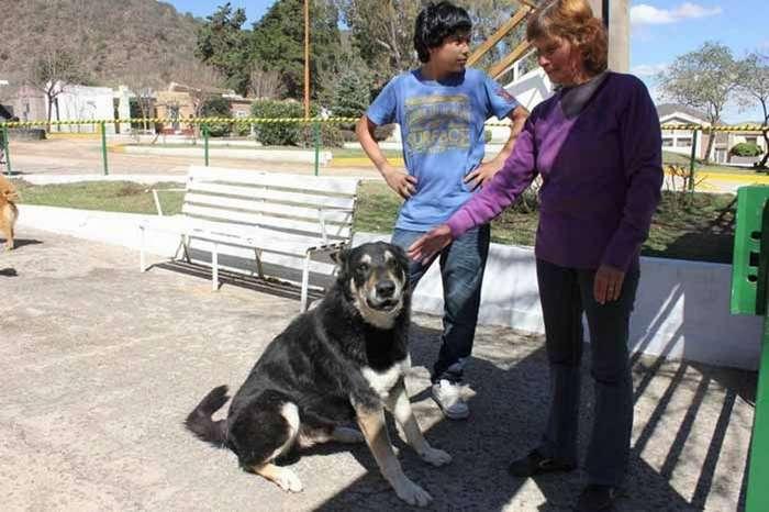 Скончался пес, который 11 лет ночевал возле могилы своего хозяина-5 фото-
