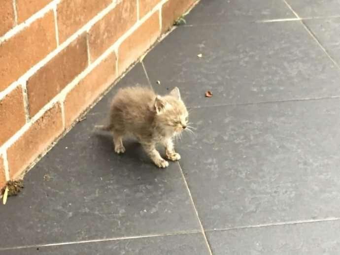 По неподвижно замершему у стены котёнку ползали муравьи, но он терпеливо ждал человека-9 фото-