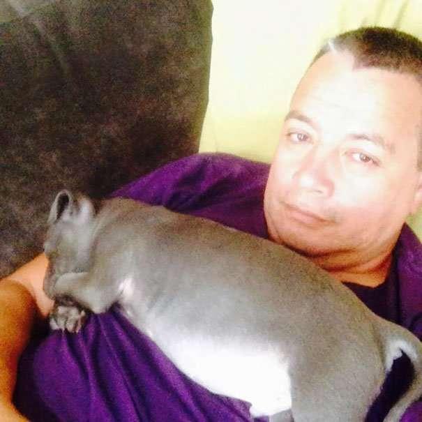 20 пап, которые не хотели, чтобы в их доме поселилась собака-21 фото-