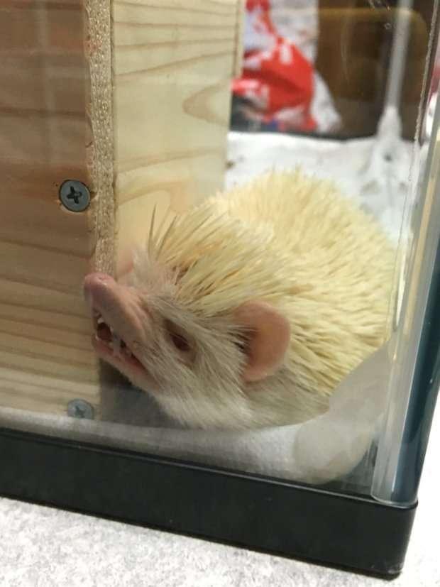 Как хочу, так и сплю: 20 животных, которые спят в самых забавных позах-20 фото-