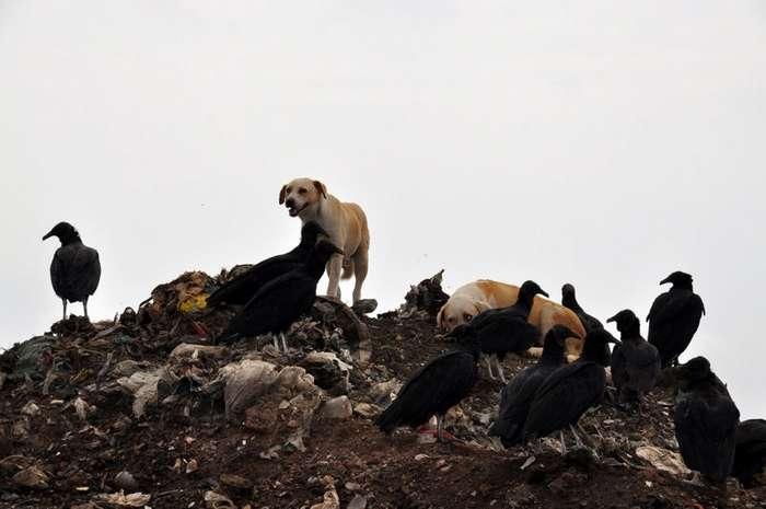 Колоритные уличные собаки со всего мира-23 фото-