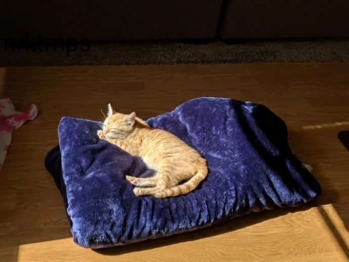 """""""Я пойду с тобой хоть на край света!"""" рыжий котенок сам выбрал себе хозяина-5 фото-"""