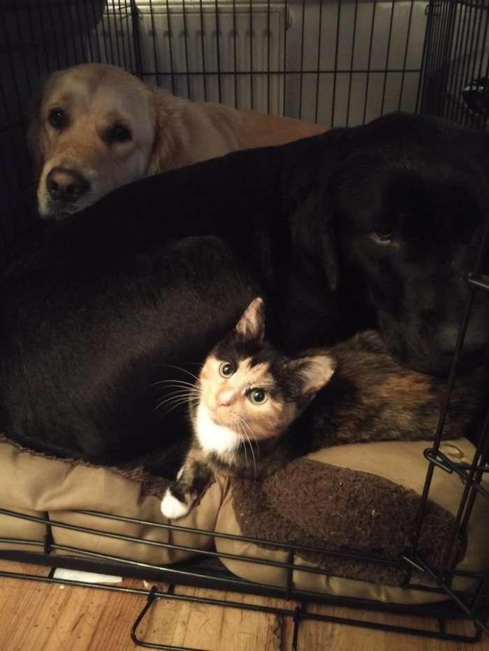 Два друга-пёсика готовы на всё, чтобы завоевать сердце маленькой прекрасной дамы-11 фото-