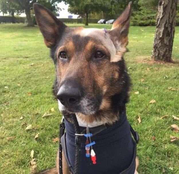 Бесстрашный полицейский пес-5 фото-