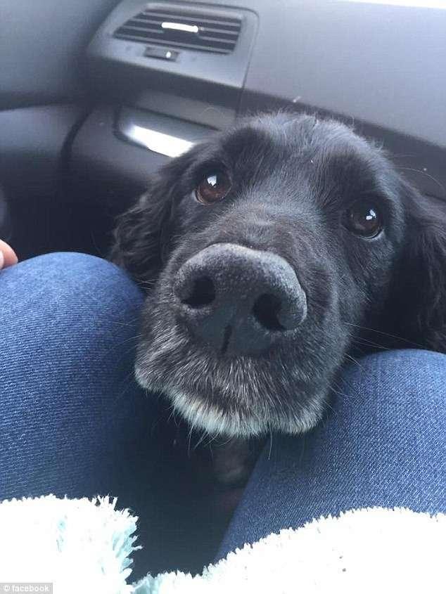 По стопам Алисы: пес нырнул в трубу в погоне за кроликом и застрял в ней на 3 дня-9 фото-