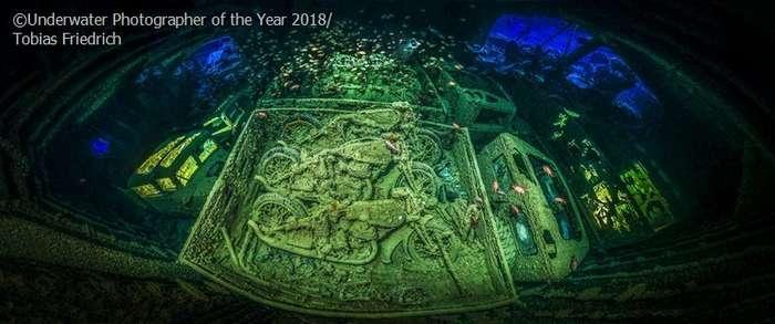 Лучшие снимки международного конкурса -Подводный фотограф года--10 фото-