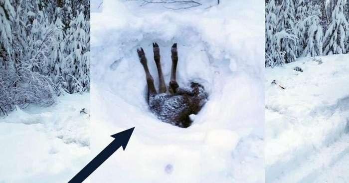 Три ноги торчало из-под снежной глади… Мужчина остановил грузовик и принялся копать!-5 фото-