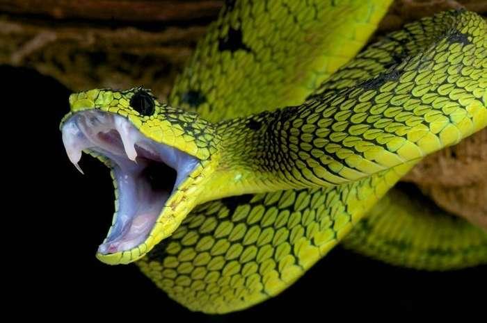 10 животных, которые способны заткнуть за пояс любой гаджет-11 фото-