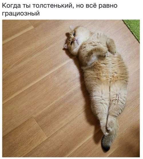 Субботний котопост-46 фото-
