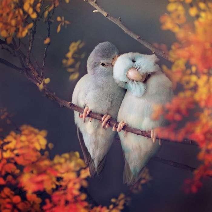 Фото влюбленных пастельных попугаев, которые растопят ваше сердечко-24 фото-