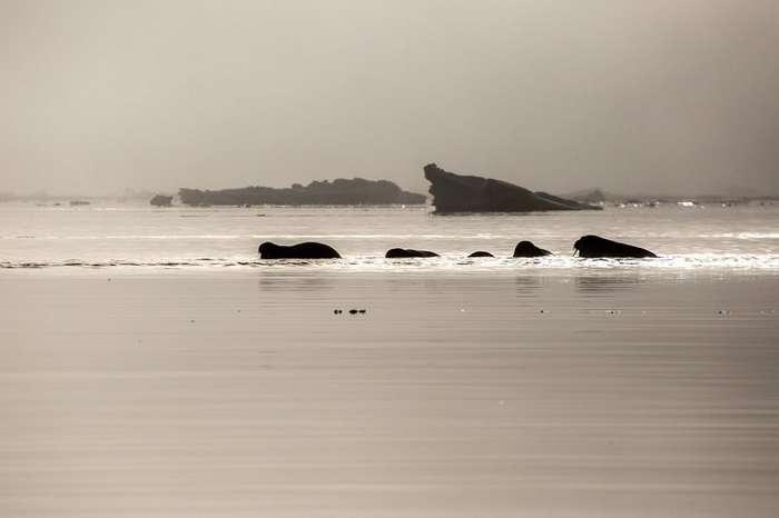 -Бухта Тихая-. Остров Гукера. Архипелаг Земля Франца-Иосифа-45 фото-